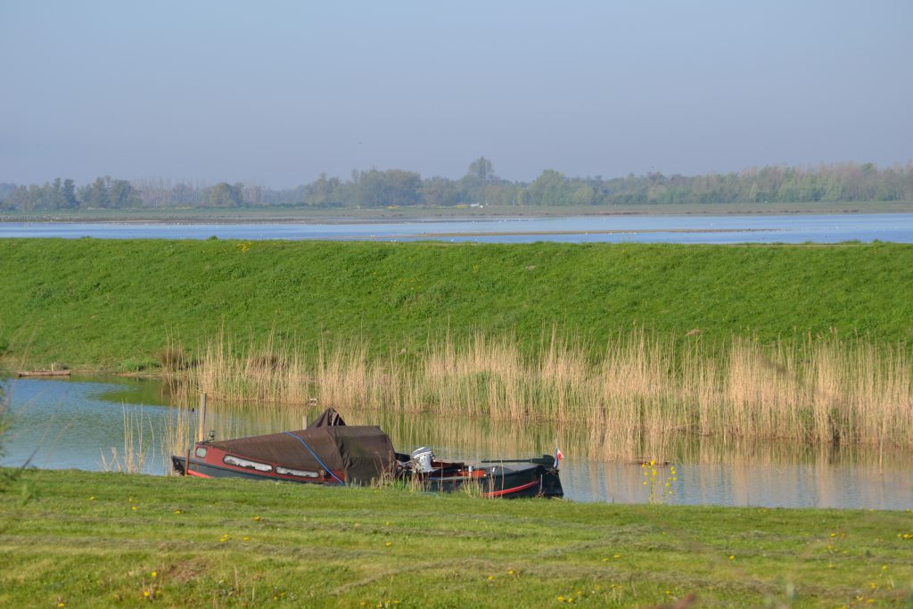 Kreek Biesbosch